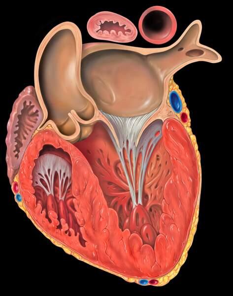 Quantum Genomics, le spécialiste des maladies cardiovasculaires