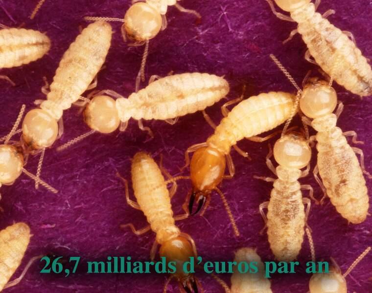 La termite de Formose