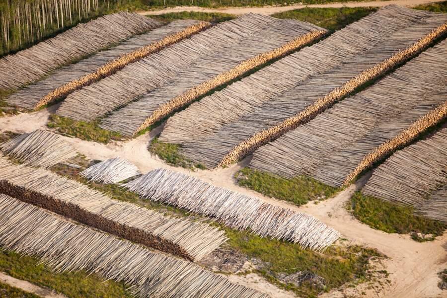 La forêt boréale est  la première victime de la ruée vers l'or noir