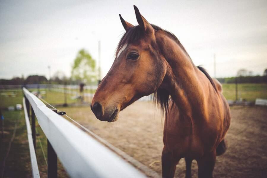 11. Soigneur de chevaux