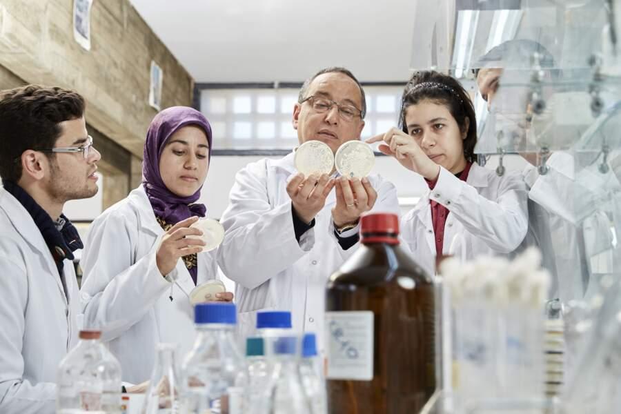 Stimuler l'action des antibiotiques grâce aux huiles essentielles