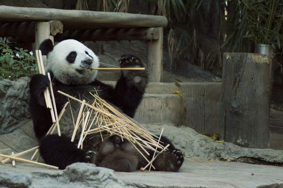 4. S'en aller câliner des pandas